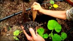 How To Grow Food at Home (First Steps)